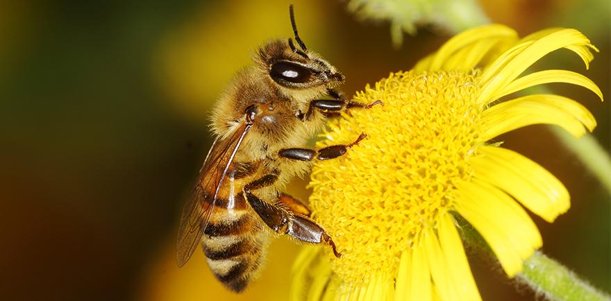 انتاج العسل الطبيعي